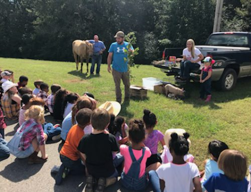 Kindergarten Students Learn About the Farm
