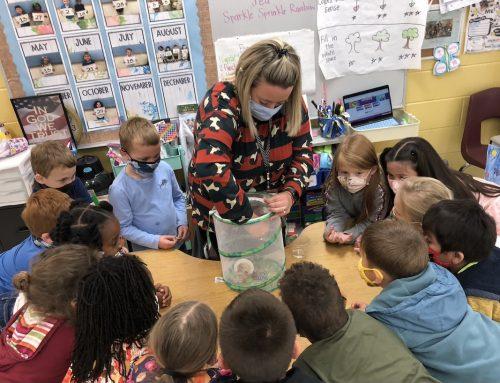 Kindergarten Students Learn about Caterpillars